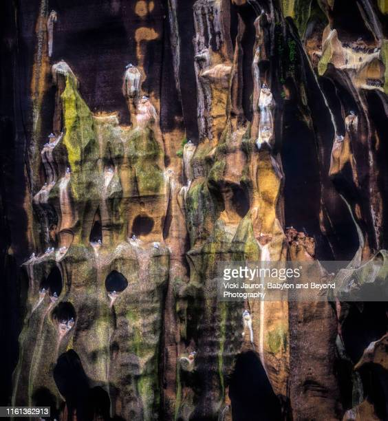columns, caves and birds on heimaey island, iceland - rookery stock pictures, royalty-free photos & images