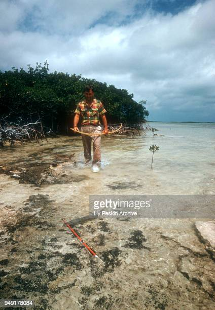 Colyn Rees walks to retrieve the fish he shot with his bow and arrow while bone fishing on April 7 1956 in the Bahamas