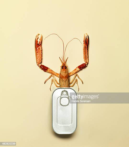Combination of a can and a langoustine