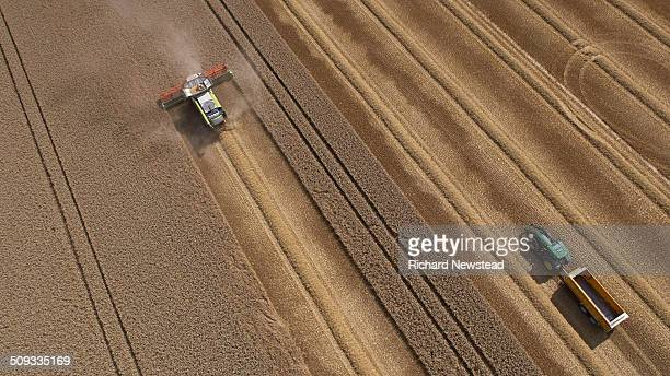combine and tractor harvesting crop - agriculture stock pictures, royalty-free photos & images