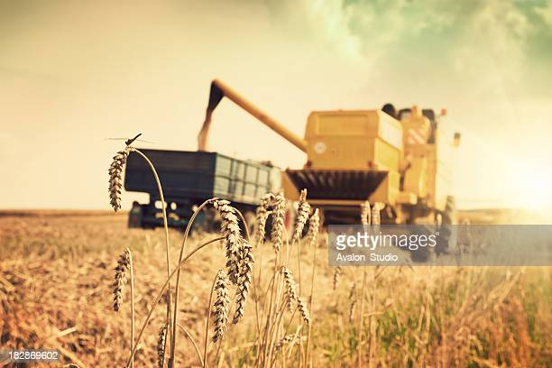 Combine harvester and tractor on the field against the setting sun.