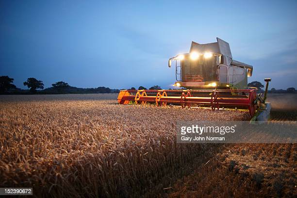 combine harvester at work in field at sunset - harvesting stock pictures, royalty-free photos & images