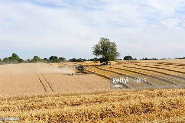 combine harvester gathering wheat crop. - combine harvester stock pictures, royalty-free photos & images