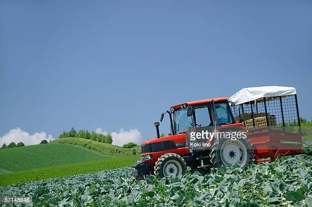 Combine harvester harvesting cabbages in field