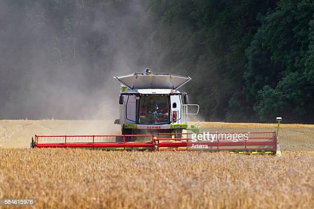 Combine harvester harvesting cereals on cornfield in summer
