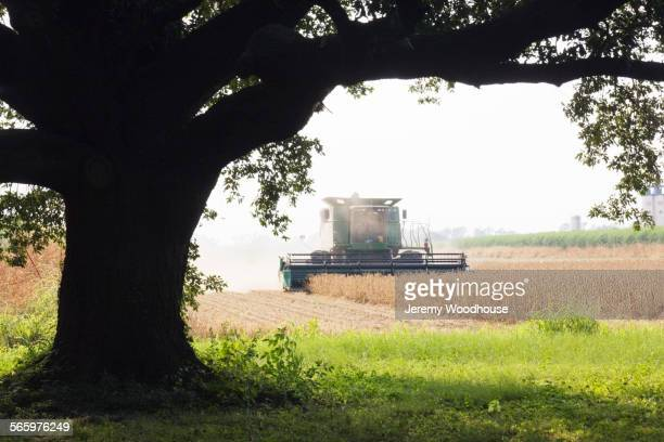 Combine harvester harvesting crop in farm field