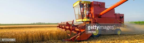 Combineren van harvester oogsten van tarwe