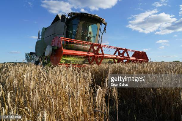 Combine harvester harvests triticale, a hybrid plant derived from wheat and rye used for animal feed, on July 23, 2020 near Haesen, Germany. The...