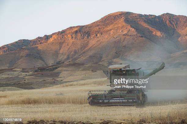 combine harvester in a field, rural scene in kurdistan province, western iran - combine harvester stock pictures, royalty-free photos & images