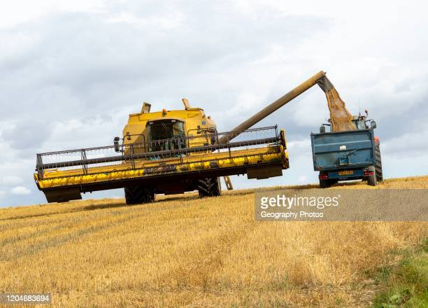Combine harvester in feed loading trailer with grain Chisbury Wiltshire England UK