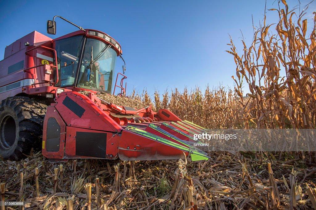 Combine harvester in field : Stock Photo