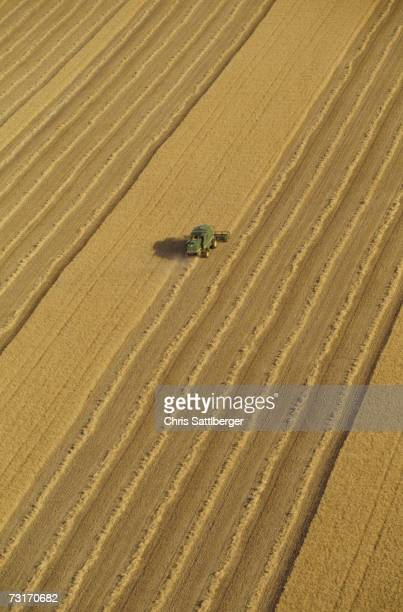 Combine harvester in wheat field, aerial view