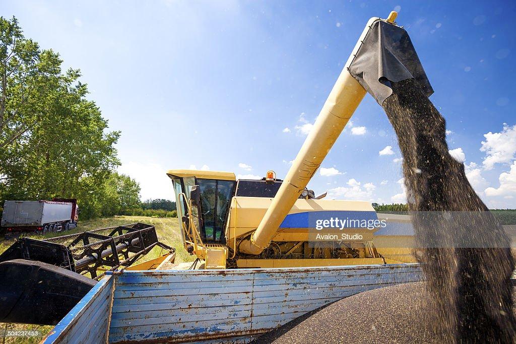 Combine harvester- oilseed rape : Stock Photo