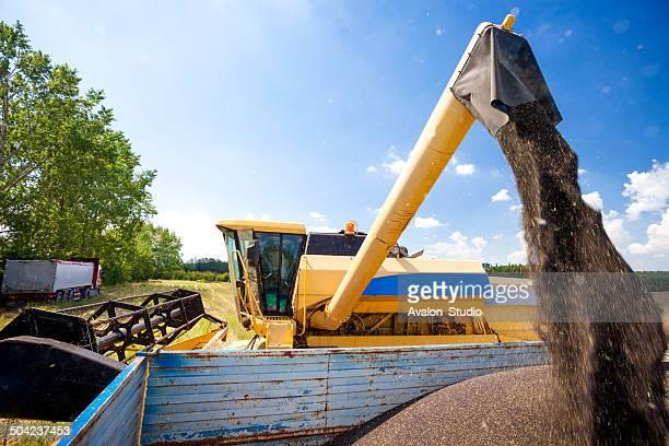 Combine harvester- oilseed rape