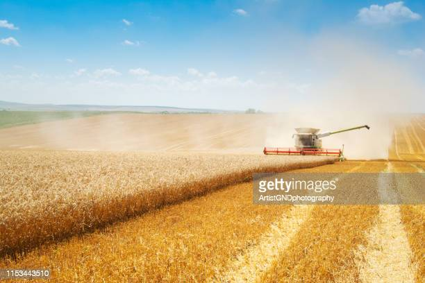 combine harvester on field. - harvesting stock pictures, royalty-free photos & images