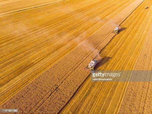 combine harvester on field - ripe stock pictures, royalty-free photos & images