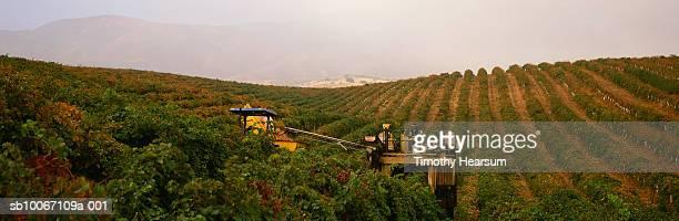 combine harvester on vineyard - timothy hearsum - fotografias e filmes do acervo
