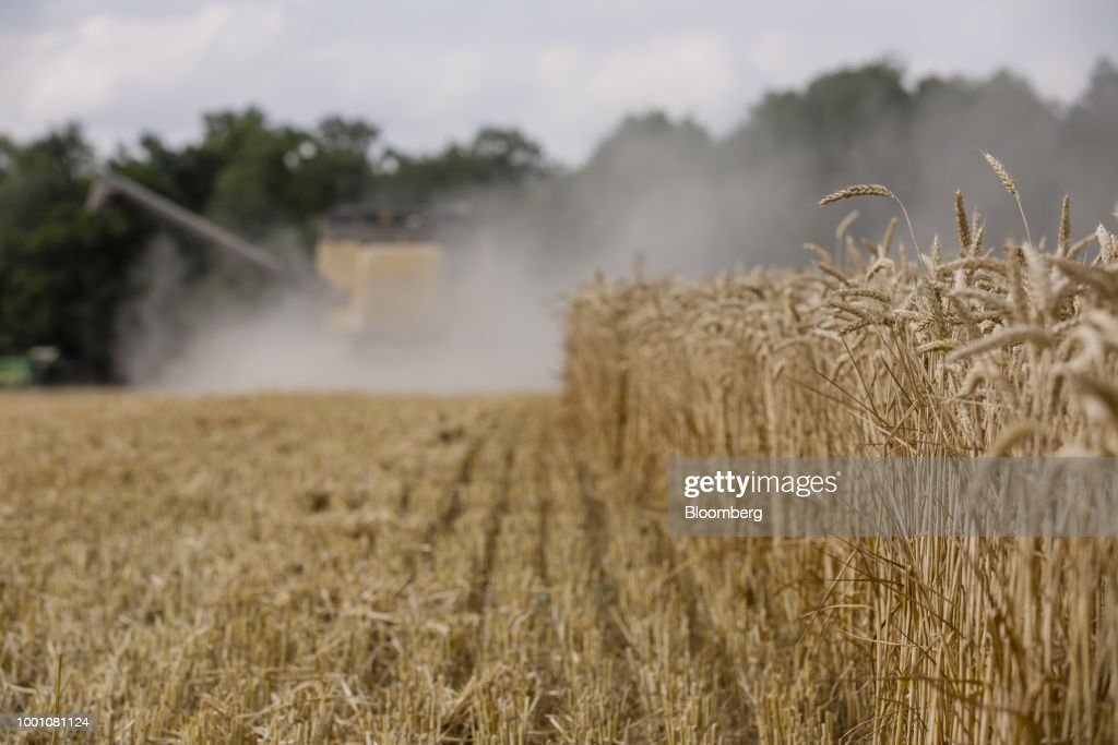 Europe's Weather Takes Toll On Wheat Harvest