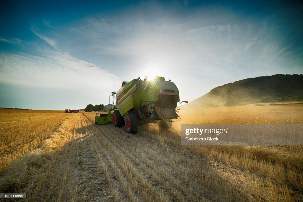 Combine harvester perspective from back view : Stock Photo