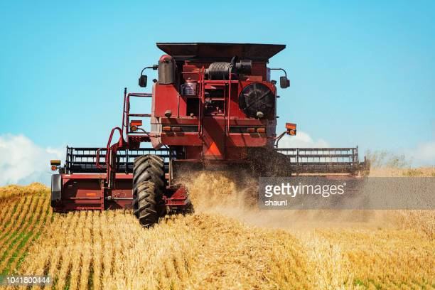 combine harvester - combine harvester stock pictures, royalty-free photos & images