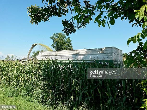 combine harvester - pjphoto69 stock pictures, royalty-free photos & images