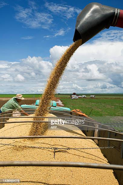 A combine harvester pours cropped soybeans in a truck in Campo Novo do Parecis about 400km northwest from the capital city of Cuiaba in Mato Grosso...