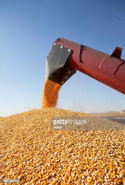 Combine harvester transferring corn to grain trailer outside