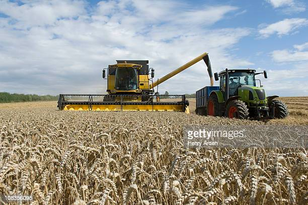 Combine harvester unloading  wheat