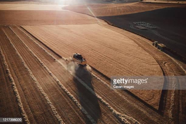 combine  harvester working at sunset from aerial view. - agricultura fotografías e imágenes de stock