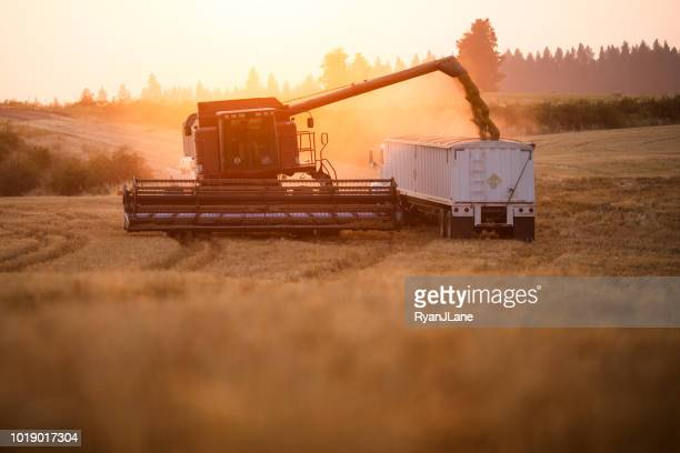 combine harvester working idaho wheat field - cereal plant stock pictures, royalty-free photos & images
