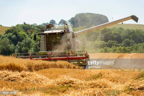 Combine harvester working in a field