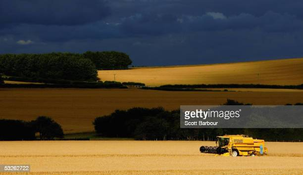 Combine harvester works its way through a field of barley in the chalk downlands, July 19, 2005 south of Salisbury, England. The future shape of...