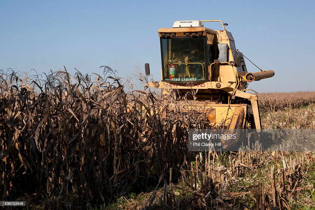 Combine harvester yellow cropping a corn filed  Brazil is
