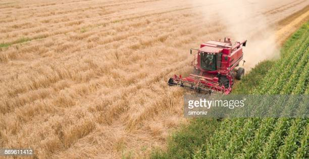 Combine harvesters reaping ripe wheat