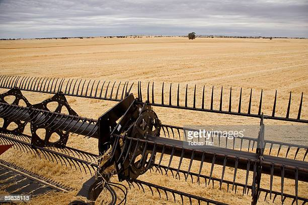 A combine harvesting a field