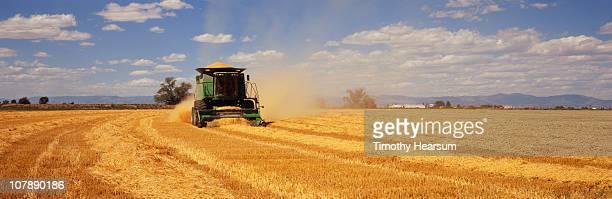 combine harvesting barley - timothy hearsum ストックフォトと画像