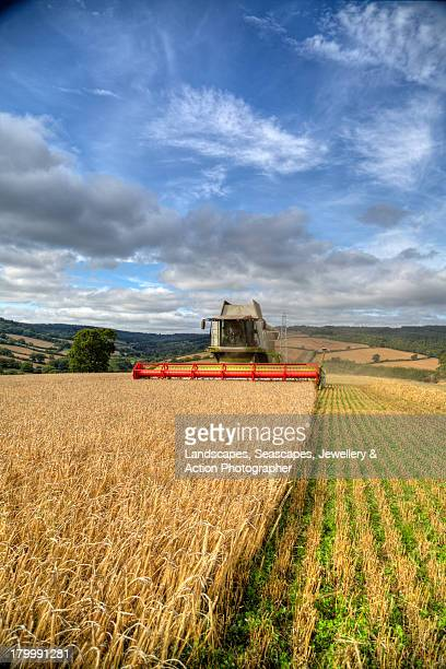 combine harvesting barley - combine harvester stock pictures, royalty-free photos & images