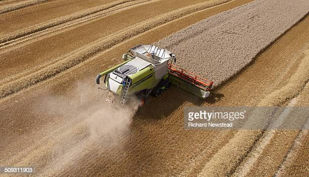 Combine Harvesting Crop in Neat Lines