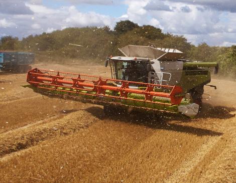 Combine Harvesting Crop - gettyimageskorea