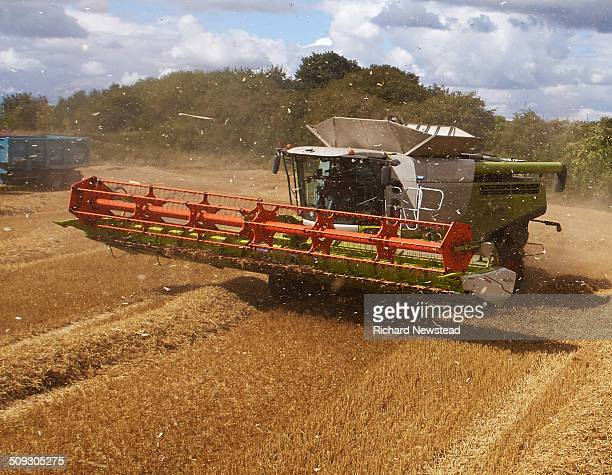 combine harvesting crop - agricultural machinery stock pictures, royalty-free photos & images