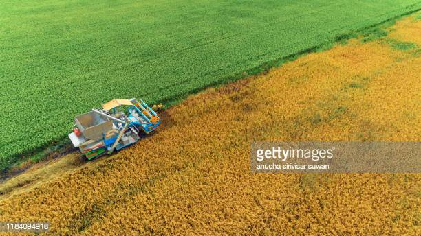combine harvesting grain collection beautiful line. - tractor stock pictures, royalty-free photos & images
