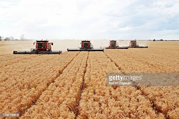 Combine harvesting wheat field