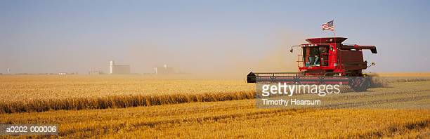 combine harvesting wheat field - timothy hearsum stock pictures, royalty-free photos & images