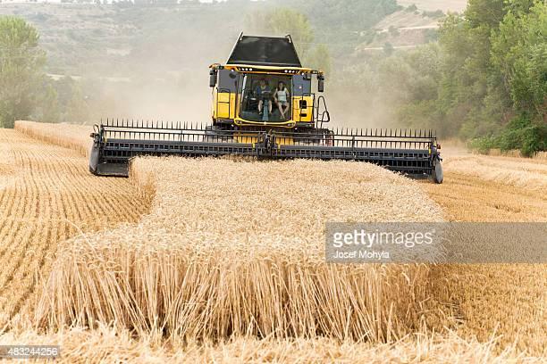 Kombinieren Sie ernten Weizen