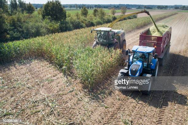 A combine harvests corn following a long drought on August 21 2018 near Darmstadt Germany The German Ministry of Agriculture is considering emergency...
