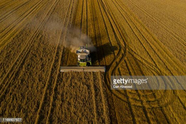 A combine harvests oats on August 23 2019 in Hollingbourne England