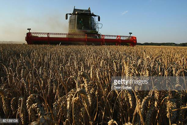 A combine harvests wheat at a field near Juehnsdorf on July 31 2008 near Berlin Germany Though world food prices are rising German farmers are...