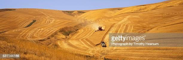 combine harvests wheat on a steep hillside - timothy hearsum stockfoto's en -beelden