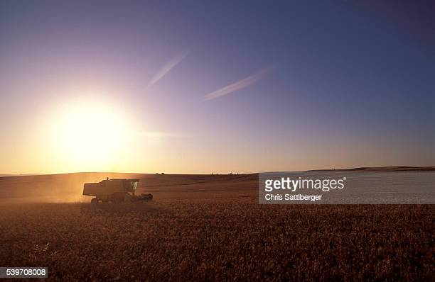 Combine in Wheat Field at Sunset
