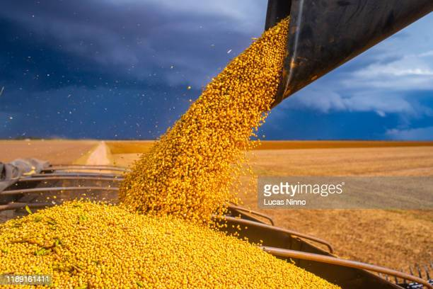 combine loads soybean in a truck - crop stock pictures, royalty-free photos & images